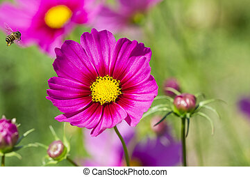 violet daisy flower on green nature background