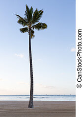 Single straight palm tree on sandy beach