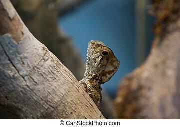 little lizard vertical - a little brown lizard climbing a...