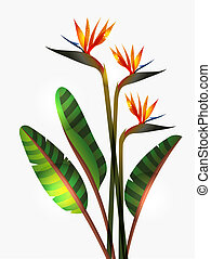 Bird of Paradise flower and stem - Bird of Paradise flower...
