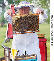 Beekeeper working in apiary - Beekeeper with honeycombs...