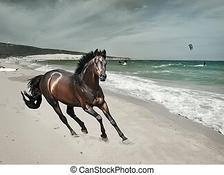 galloping bay sportive stallion at sea beach art toned -...
