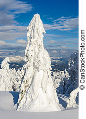Lonely snow-covered fir tree in winter mountains on a sunny...
