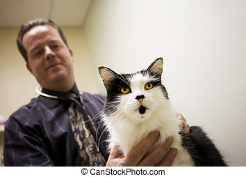Cat in a veterinary office - Veterinarian and a cat in...