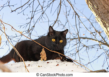 Young black cat outdoors - A young black cat outdoors in...