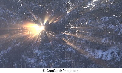 winter sunlight in forest