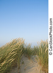 Sea sand and dunes - Grassy dunes under a blue sky