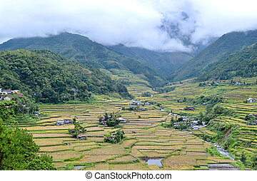 Philippines, rice terraces in the valley Hapao, Banaue