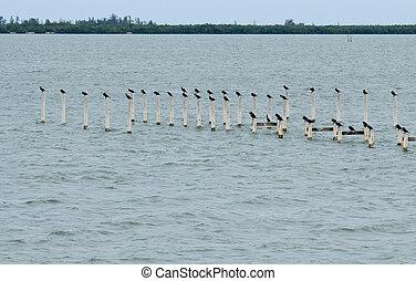 Cormorants on wooden posts