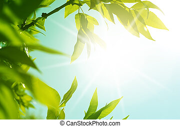 fresh new green leaves glowing in sunlight. Defocus