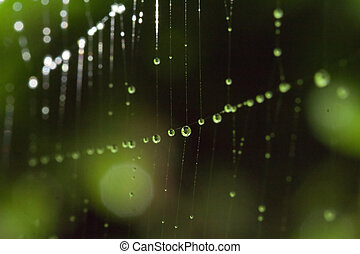 drops - some drops in a cobweb