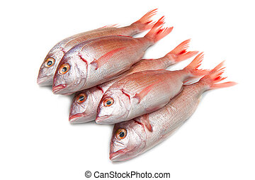 sea bream - a group of sea bream on white