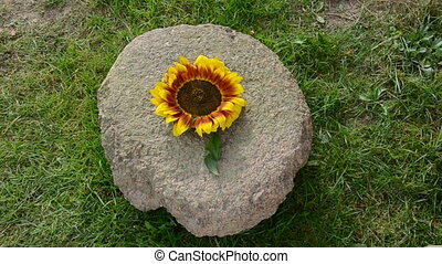 old millstone and food - put sunflower, wheat ears and corn...