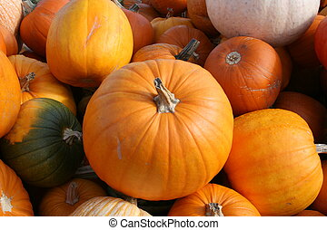 Orange Pumpkins - A pile of orange pumpkins