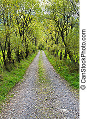 Country road with willows - Country road with beautiful...