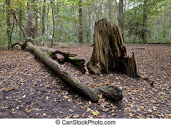 fallen dead tree - A fallen dead tree in the woods.