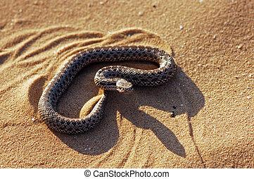 Serpent - Portrait of a viper