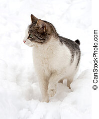 Cat on white snow - cat outdoors in the winter is on the...