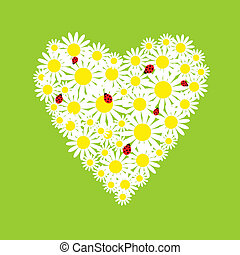 The heart of daisies with ladybirds - The heart of a daisies...
