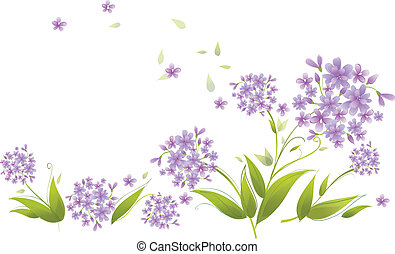 Spray of blue agapanthus flowers - This illustration is a...