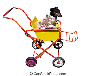 Dog in Pushchair isolated with clipping path