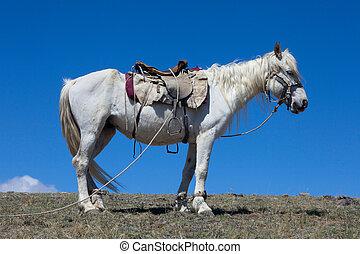 Stallion under saddle on a mountain pasture