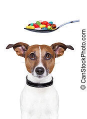 dog pills diet - dog scared of a spoon full of pills