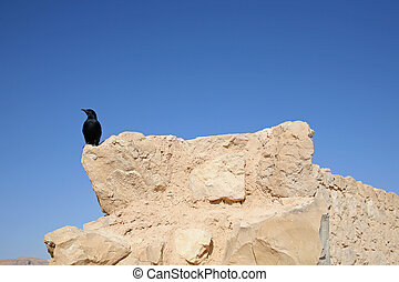 Bird in the Masada fortress in Israel