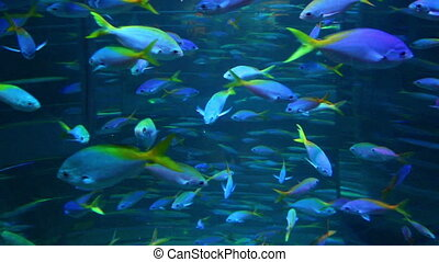 school of many fish in aquarium