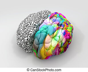 Left And Right Brain Concept Perspective - A typical brain...
