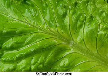 Leaf texture - Fresh green lettuce leaf texture close-up