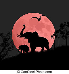 Silhouette view of elephants