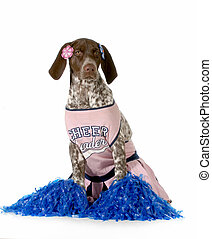 cheerful dog - german shorthaired pointer dressed up like a...