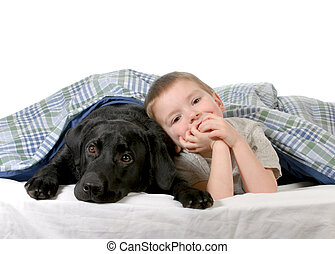boy and dog - four year old boy and his dog in bed isolated...