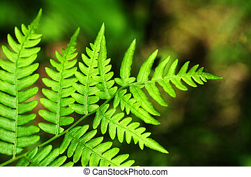Fern in the forest - I took this beautiful fern photo in the...