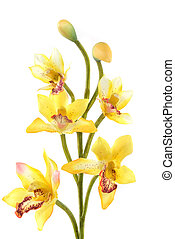 Orchid - An orchid