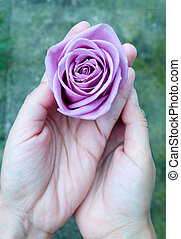 Purple rose - Hands holding a purple rose