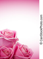 Romantic Roses - Beautiful pink roses