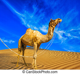 Desert landscape. Sand, camel and blue sky with clouds....