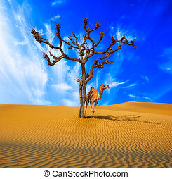 Desert conceptual background. Lonely tree and camel in surrealistic sandy environment