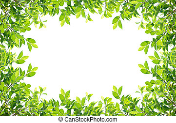 Leaves frame isolated - leaves frame isolated on white...