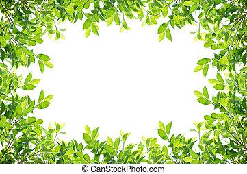 hojas, marco, aislado