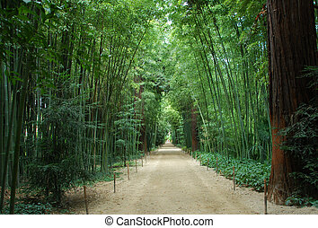 bamboo forest - Asian Bamboo forest in a park in Anduze,...
