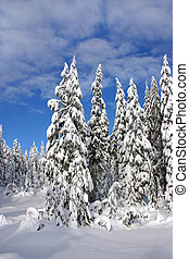 Winter in the woods - A scene with snow during winter time...