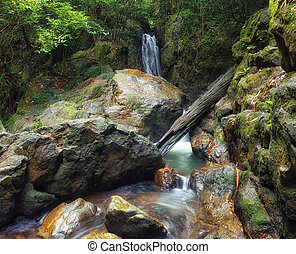 Forest photography, mountain river and creeks with waterfalls beautiful landscape