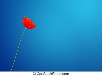 poppy under a blue sky - concept of poppy under a blue sky