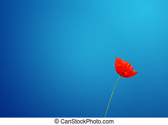 poppy under a blue sky - concept of poppy under a blue sky