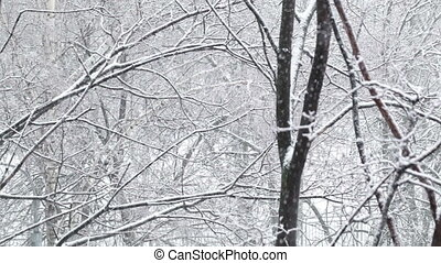 Snowfall - Snowfall and the trees Wide shot