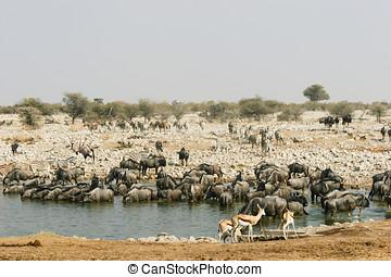 Waterhole in Etosha NP, Namibia - Waterhole in Etosha...