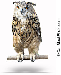 wise owl on a wooden bark with shadow isolated over white...